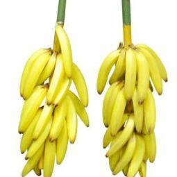 bananentros.nl